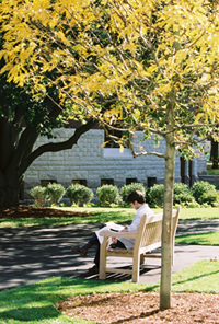 Person reading outside on a bench under a tree