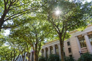 Sun shines through trees in front of Langdell Hall.