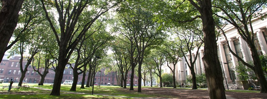 Trees outside Langdell Hall