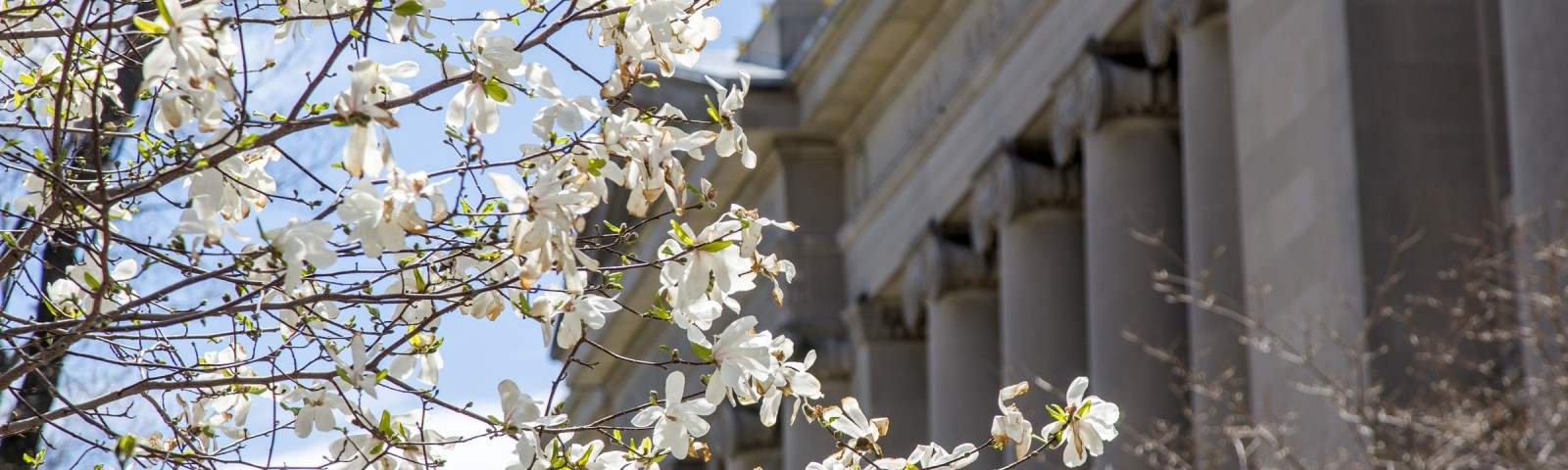 Flowers blooming on a tree on campus