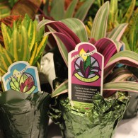 Pots of plants with tags