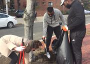 four participants work together to dig out weeds from a tree well.