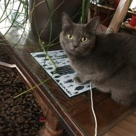 Grey cat peeking up next to a house plant
