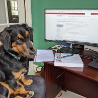 A dog sitting in front of a computer