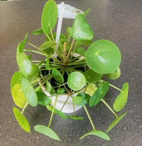Image of small house plant